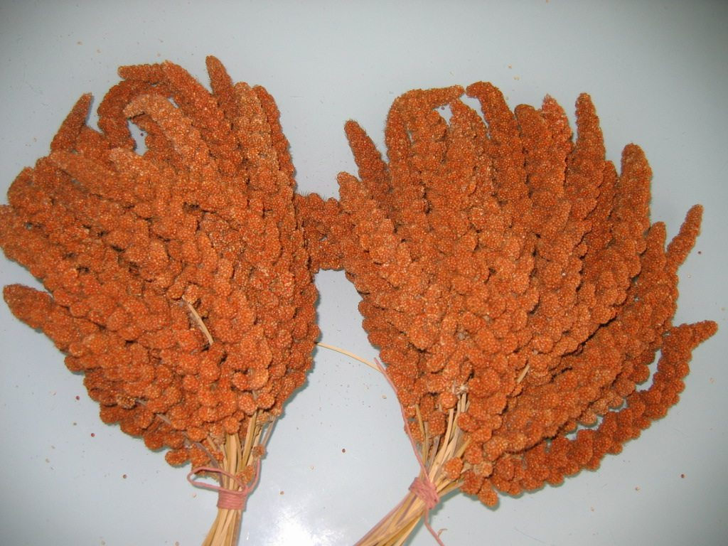 Versele-Laga French Red Millet Sprays